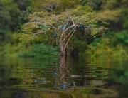 Instalação de Mai-BrittWolthers no Amazonas | Matias Brotas